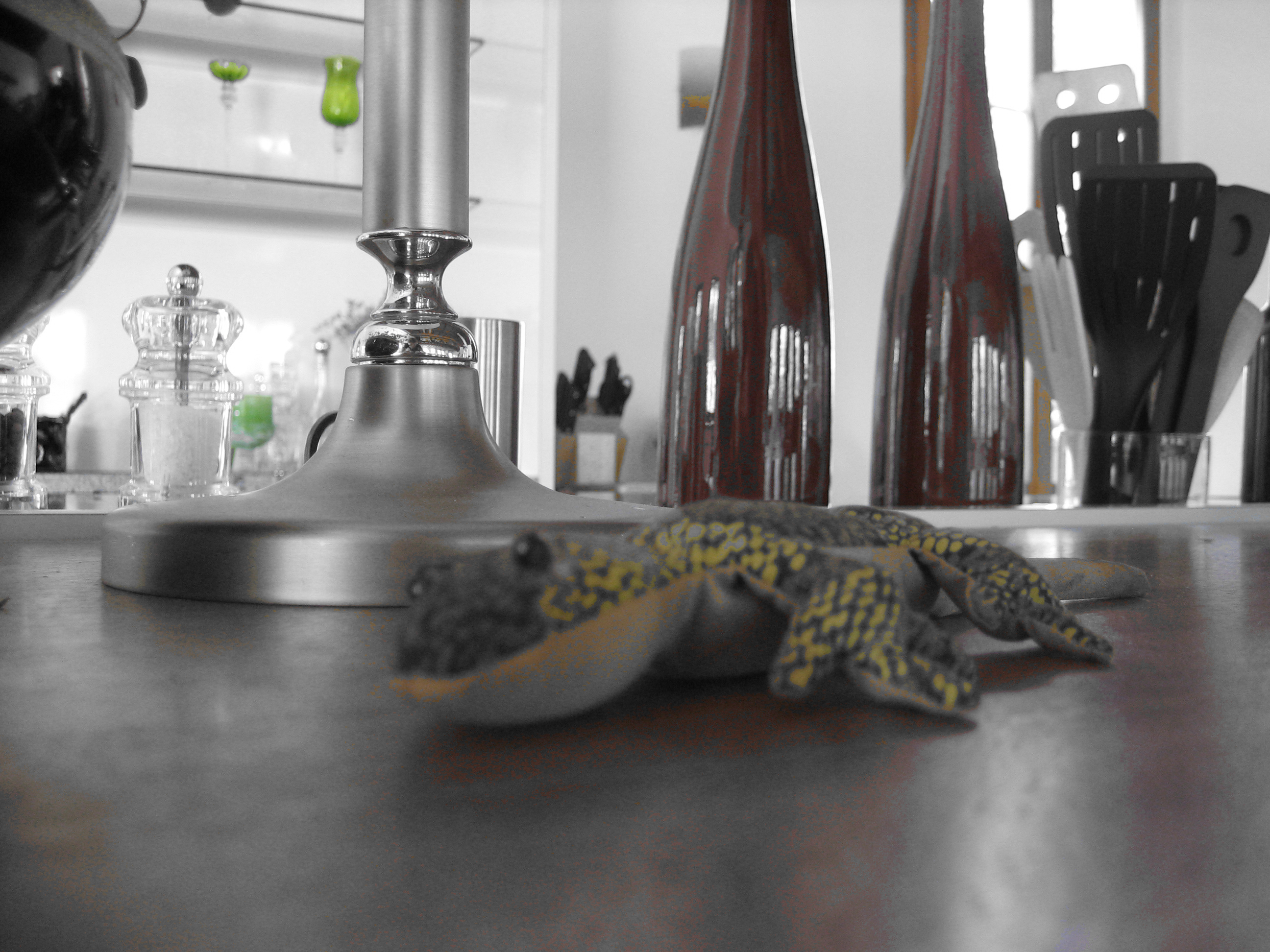 https://www.bmuellers.ch/wp-content/uploads/2015/03/gecko.jpg